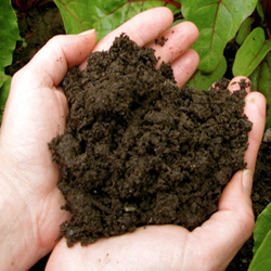 All Natural home grown compost